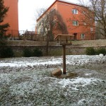 zahrada školy