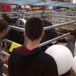 BVV 2016, hospodářské zvířata 10
