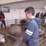 BVV 2016, hospodářské zvířata 13