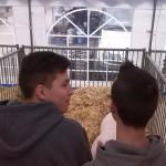 BVV 2016, hospodářské zvířata 16
